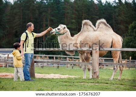 Young father and his little son looking at camel - stock photo