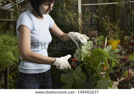 Young female gardener pruning leaves in greenhouse - stock photo