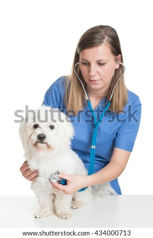 Young female veterinarian examining pet dog - stock photo