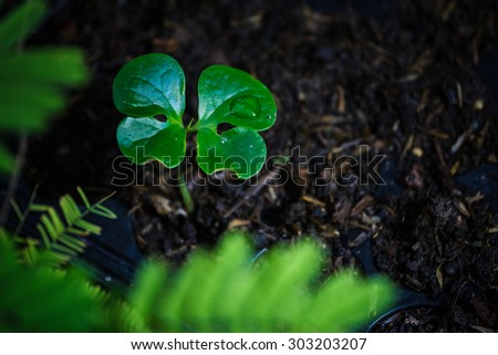 Young fresh seedling stands in black  plastic pots.The concept of new life. - stock photo