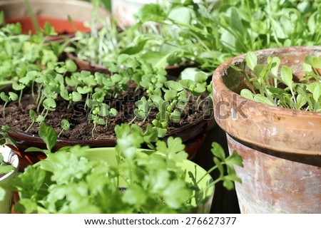 Young fresh seedlings in pots - stock photo