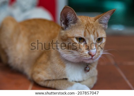 Young ginger cat, Nature - stock photo