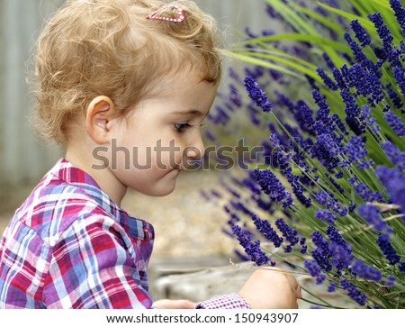 Young girl and lavender. A pretty toddler leaning in to smell some lavender flowers. She is wearing a colourful top with red white and blue colours and has blonde curly hair. - stock photo