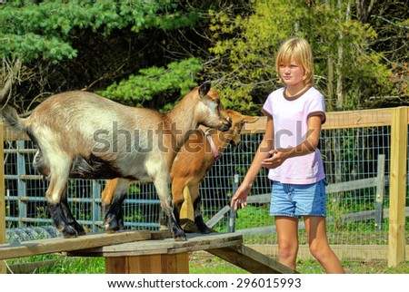 Young Girl Approaching her Pet Goats - stock photo