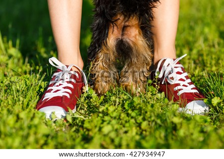 Young girl in the red sneakers standing on the grass with her dog. Paws and legs closeup - stock photo