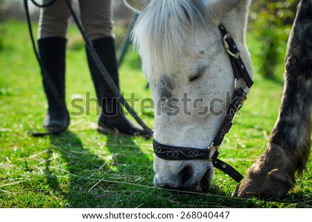 young girl is grazing the horse on the meadow - stock photo