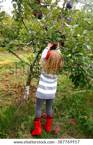 young girl picking apple - stock photo