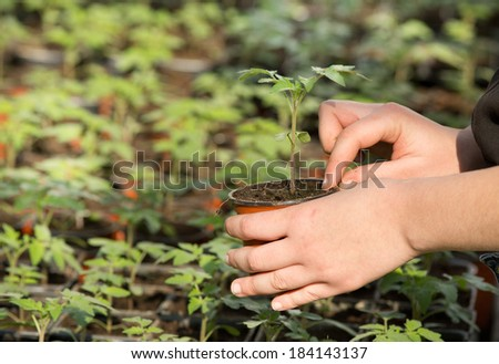Young girl's hand holding a flowerpot with small seedling - stock photo