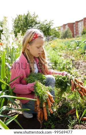 young girls working in vegetable garden, hold fresh carrots - stock photo