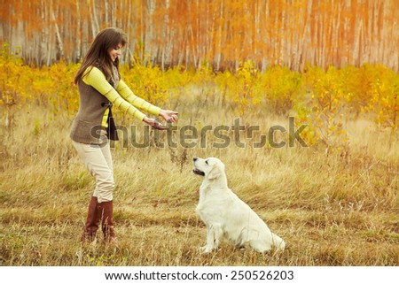 Young golden retriever for a walk with his owner. Dog breed labrador outdoors. - stock photo
