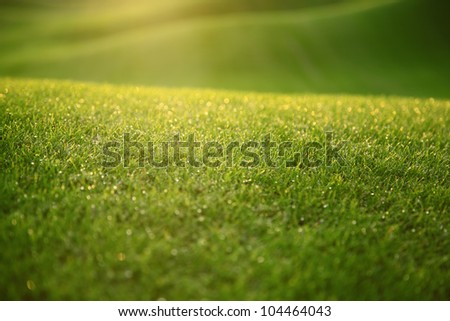 Young grass covered with dew in the morning light. - stock photo