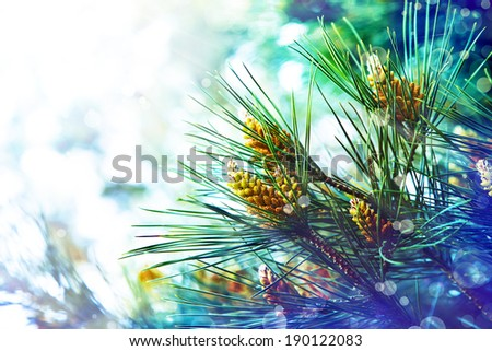 young green fir tree or pine branches. Spring summer background - stock photo