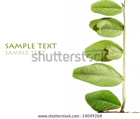 young green leaves against white background and plenty of space for text - stock photo
