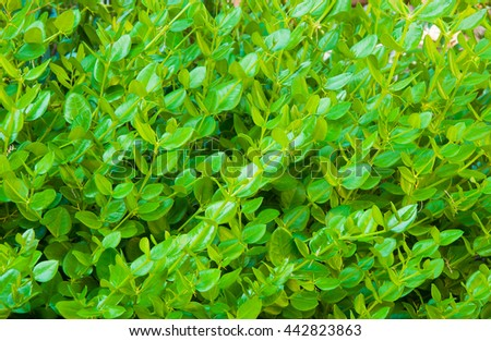 Young green leaves - background - stock photo