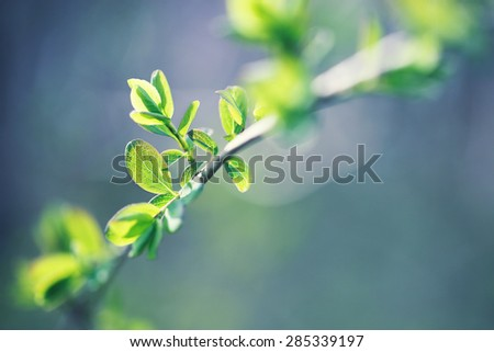 young green leaves on branch - stock photo