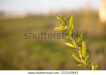 Young green leaves on the bush in spring day  - stock photo