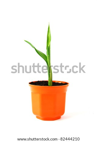 Young green plant in orange pot - stock photo
