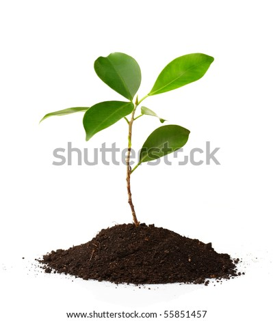 Young green plant on a white background - stock photo