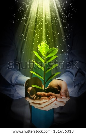 Young green sprout in human hands. Ecology concept - stock photo