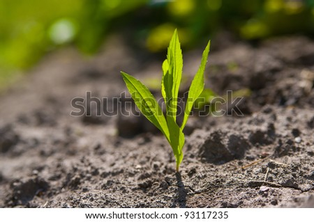 Young growing plant in a desert sand - stock photo