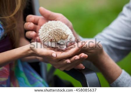 Young hedgehog in hands men and women - stock photo