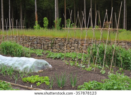 Young Home Grown Vegetable Plants on an Allotment at Rosemoor, Devon, England, UK - stock photo