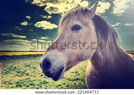 Young horse at green farm field - stock photo