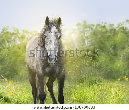 Young horse in sunlight,portrait  - stock photo