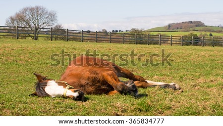 Young horse sleeping in the sunshine - stock photo