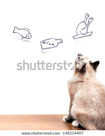 young hunger cat is dreaming about eating looking at painted on a wall fish, milk and chicken - stock photo