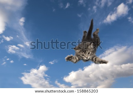 Young kitten jumps and glide through the air - stock photo