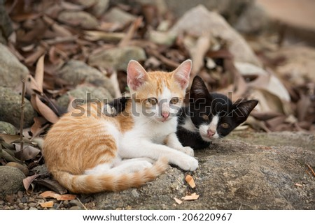 Young kittens hugging on the rock. - stock photo