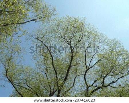 young leafs on tree at spring day - stock photo