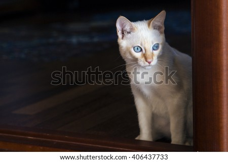 Young little cat watching to the right  - stock photo