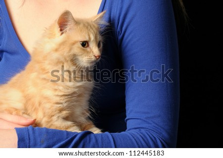 Young long haired cream coloured kitten having a cuddle from it's owner - stock photo