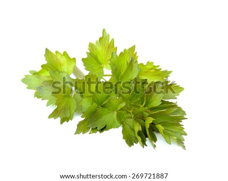 Young lovage on a white background - stock photo