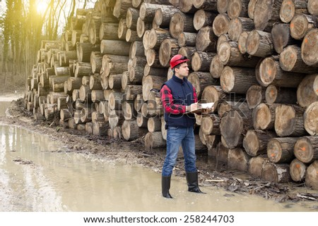Young lumber engineer standing with notebook beside cut trunk stock - stock photo