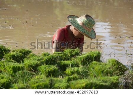 young man Farmer working at green rice field.,Farmer in paddy fields at yasothon thailand July 06 2016 - stock photo