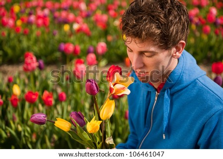 Young man is picking flowers in Dutch flower fields - stock photo