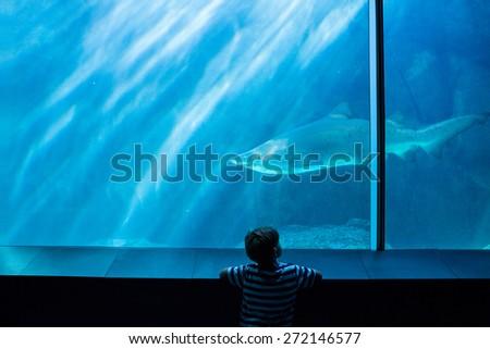 Young man looking at a shark in a tank at the aquarium - stock photo