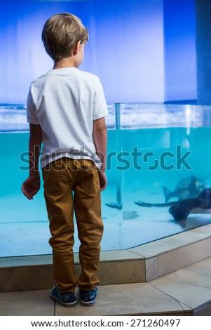 Young man looking at manta ray in a tank at the aquarium - stock photo