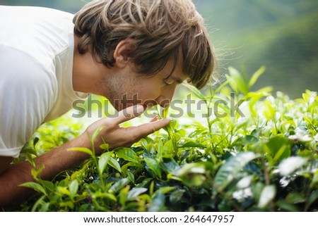 Young Man on Tea Plantation Smelling Fresh Tea Leaves - stock photo