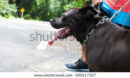 Young man with black dog running on a rural road during sunset at streets dry leaf - stock photo