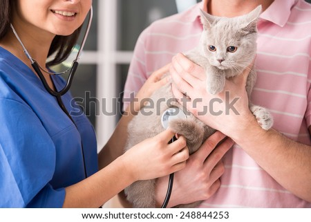 Young man with his cat on a visit to the veterinarian. Close-up of a cat. - stock photo