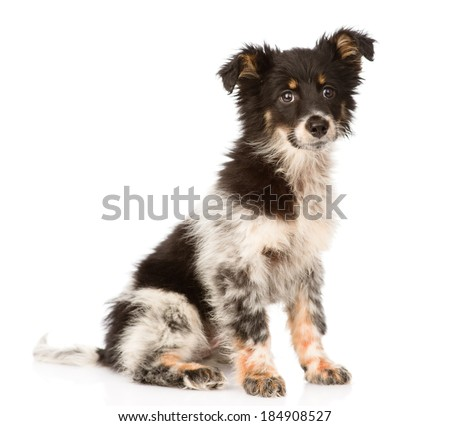 young mixed breed dog looking at camera. isolated on white background - stock photo