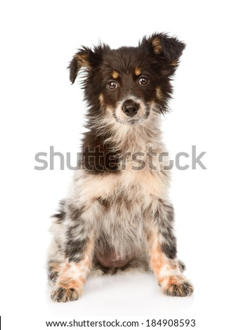 young mixed breed dog sitting in front. isolated on white background - stock photo