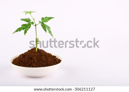 Young neem tree in white bowl. - stock photo
