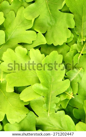 Young oak green leaves background - stock photo
