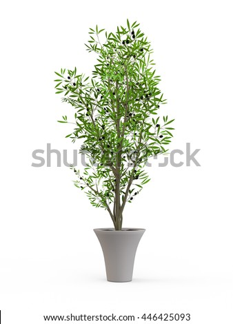 Young olive tree in stylish ceramic pot isolated on white background. 3D Rendering, 3D Illustration. - stock photo