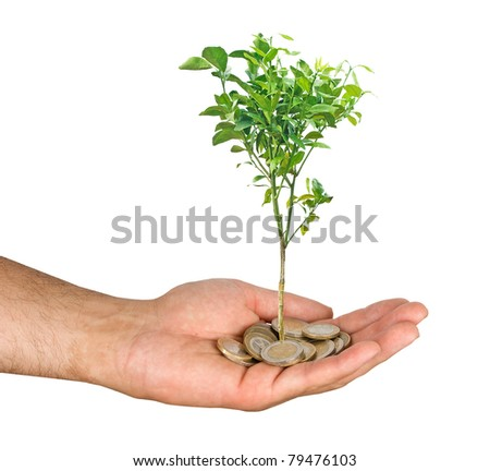 Young orange tree in hand - stock photo